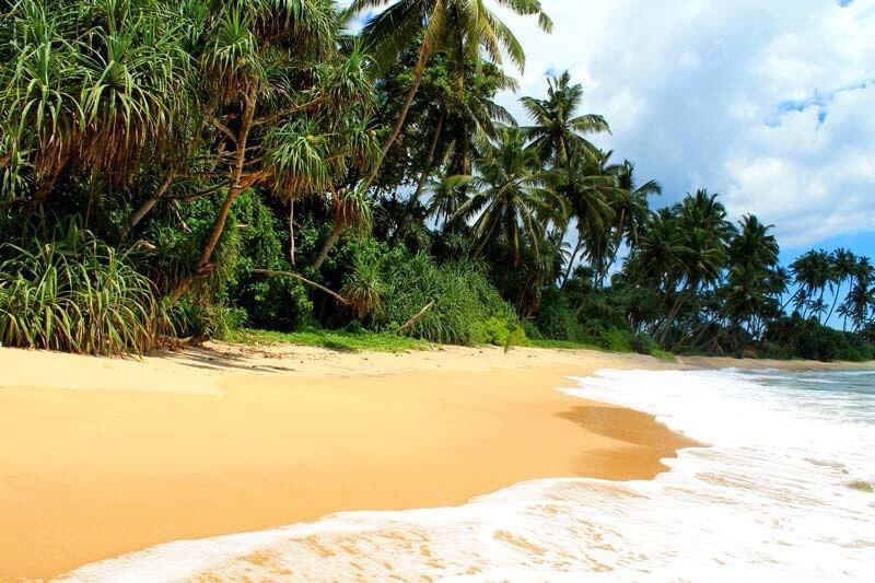 Шри Ланка январь