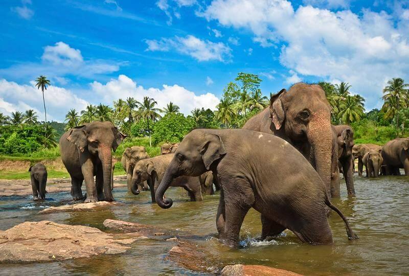 Шри Ланка отдых декабрь