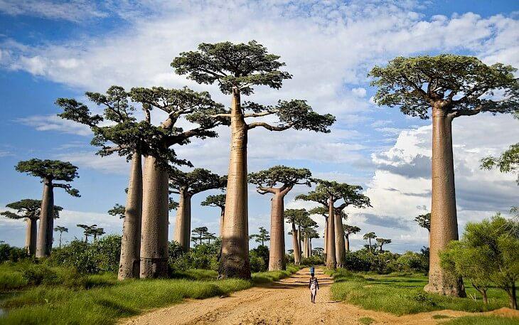 Мадагаскар Новый Год март