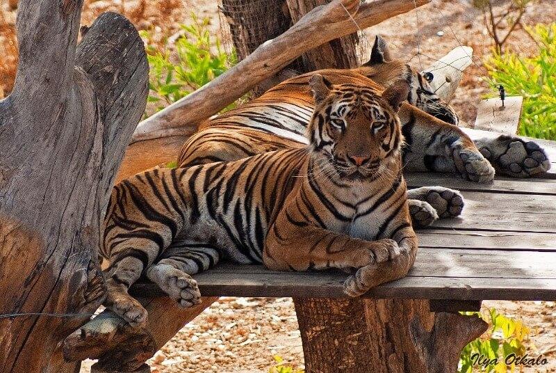 Зоопарк в Фригии